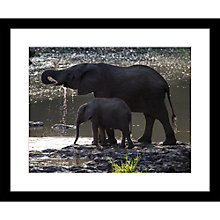 Buy Roger Hooper - Elephant and Calf Framed Print, 49 x 59cm Online at johnlewis.com