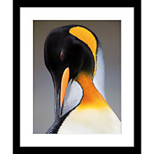 Buy Roger Hooper - King Penguin Framed Print, 49 x 49cm Online at johnlewis.com