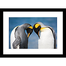 Buy Roger Hooper - Two Penguins Framed Print, 44 x 59cm Online at johnlewis.com