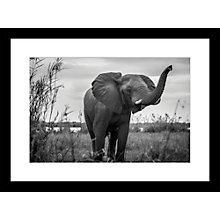 Buy Roger Hooper - Elephant Framed Print, 44 x 59cm Online at johnlewis.com