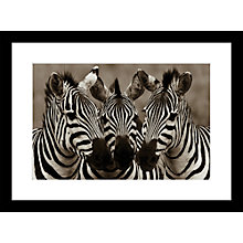 Buy Roger Hooper - Zebra Framed Print, 59 x 44cm Online at johnlewis.com