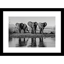 Buy Roger Hooper - Three Elephants Framed Print, 44 x 59cm Online at johnlewis.com