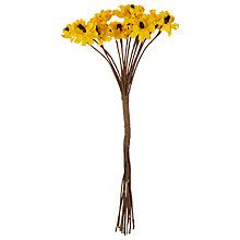 Buy John Lewis Sunflowers Online at johnlewis.com