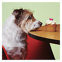 Buy Card Mix Jack Russell Greeting Card Online at johnlewis.com