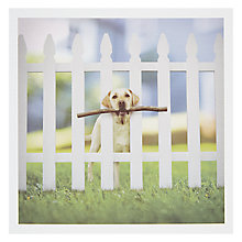 Buy Woodmansterne Labrador Between Fence Post Greeting Card Online at johnlewis.com