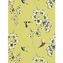 Buy Harlequin Amazilia Wallpaper Online at johnlewis.com