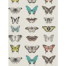 Buy Harlequin Papilio Wallpaper Online at johnlewis.com
