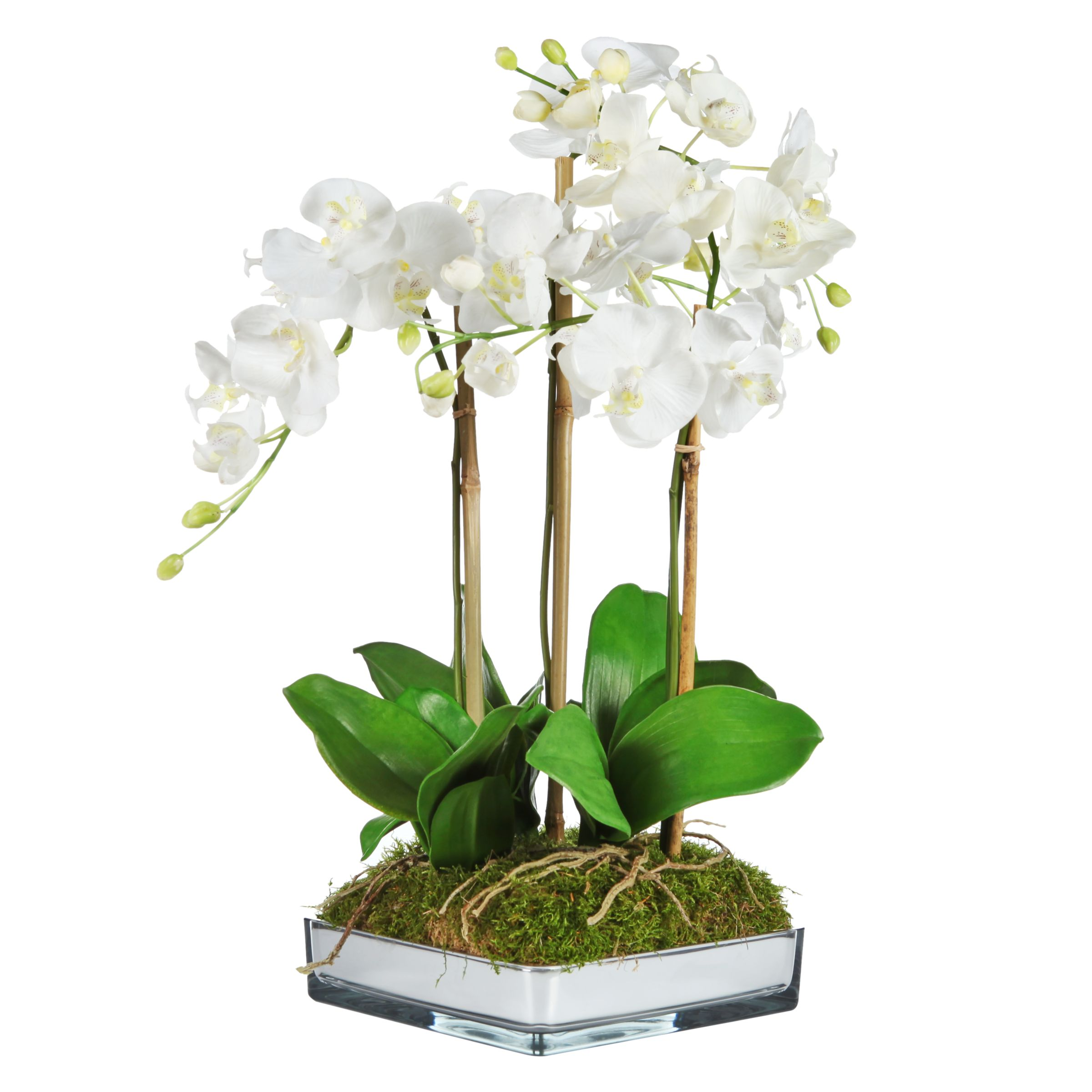 Peony Peony Phalaenopsis in Mirrored Planter, White
