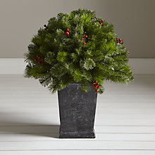 Buy John Lewis Pre-lit Balmoral Berry Porch Bush Online at johnlewis.com
