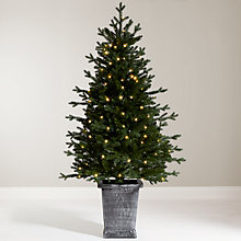 Buy John Lewis Pre-Lit Potted Spruce, 5ft Online at johnlewis.com