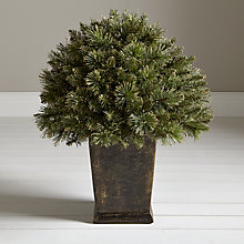 Buy John Lewis Pre-Lit Gold Glitter Tip Porch Bush, 2ft Online at johnlewis.com