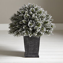 Buy John Lewis White & Glitter Tip Porch Bush Online at johnlewis.com