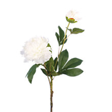 Buy Floralsilk Wild White Peony Online at johnlewis.com