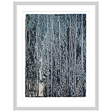 Buy Anna Harley - Swedish Birch, Limited Edition Framed Print, 93 x 73cm Online at johnlewis.com