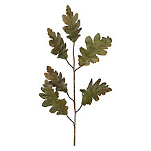 Buy Peony Oak Leaf, Green Online at johnlewis.com
