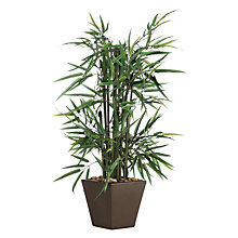 Buy John Lewis Potted Bamboo Online at johnlewis.com