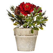 Buy John Lewis Midwinter Mini Potted Red Berry Bush Online at johnlewis.com