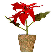 Buy John Lewis Midwinter Mini Potted Poinsettia, Red Online at johnlewis.com