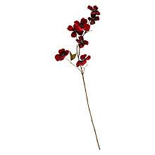 Buy John Lewis Ruskin House Dogwood Stem, Red Online at johnlewis.com