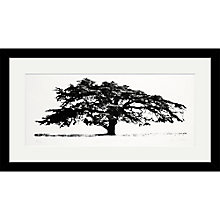 Buy Clare Cutts - Cedar at Coombe Dingle, Original Screenprint, 38 x 68cm Online at johnlewis.com