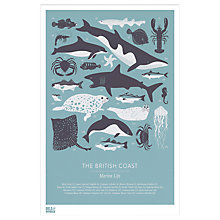 Buy Bold & Noble - British Coast Marine Life Framed Print, 43 x 53cm Online at johnlewis.com