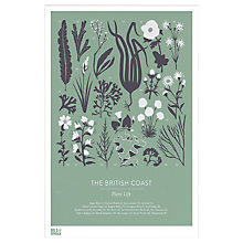 Buy Bold & Noble - British Coast Plant Life, Framed Print, 53 x 43cm Online at johnlewis.com