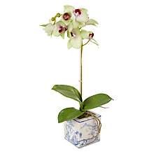 Buy Peony Orchid In Oriental Pot, Green Online at johnlewis.com