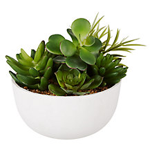 Buy John Lewis Mixed Succulents Pot Online at johnlewis.com