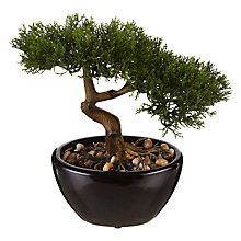 Buy John Lewis Small Bonsai Tree Online at johnlewis.com