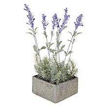 Buy John Lewis Lavender Pot Online at johnlewis.com