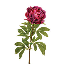 Buy Floralsilk King Peony Stem, Magenta Online at johnlewis.com