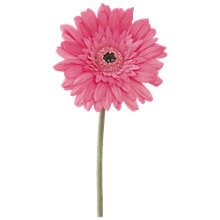 Buy Floralsilk Gerbera Stem, Pink Online at johnlewis.com