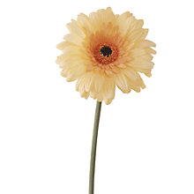 Buy Floralsilk Gerbera Stem, Yellow Online at johnlewis.com