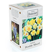 Buy David Domoney Daffodil Double Mix Bulbs Online at johnlewis.com