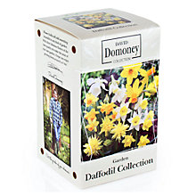 Buy David Domoney Daffodil Collection Bulbs Online at johnlewis.com