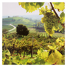 Buy Woodmansterne FSC-Certified Vineyard Scene Online at johnlewis.com