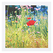 Buy PJF Photography FSC-Certified Wild Flowers Card Online at johnlewis.com