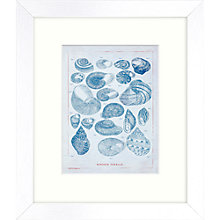 Buy Shell Framed Print, 27 x 23cm Online at johnlewis.com