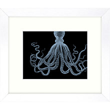 Buy Octopus Framed Print, 27 x 23cm Online at johnlewis.com
