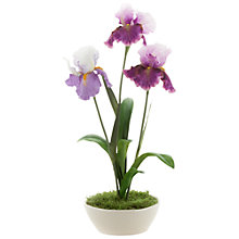 Buy Peony Irises in Bowl Online at johnlewis.com