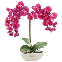 Buy Peony Pink Orchid in Square Pot Online at johnlewis.com
