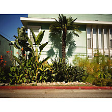 Buy Lola James Harper Los Angeles Palm Tree Unframed Print Online at johnlewis.com
