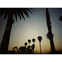 Buy Lola James Harper Lili Palm Tree Unframed Print Online at johnlewis.com