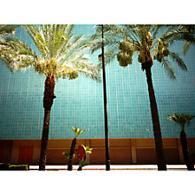 Buy Lola James Harper Las Vegas Palm Tree Unframed Print Online at johnlewis.com