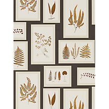Buy Sanderson Fern Gallery Wallpaper Online at johnlewis.com