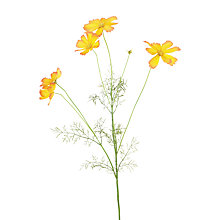 Buy Floralsilk Garden Cosmos Spray, Orange Online at johnlewis.com