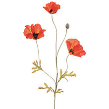 Buy Floralsilk Poppy Field, Dark Orange Online at johnlewis.com