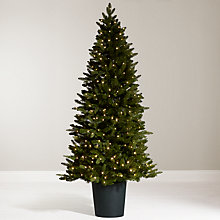 Buy John Lewis 7ft Bala Pre-Lit Potted Fir Christmas Tree Online at johnlewis.com