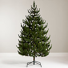 Buy John Lewis Chamonix 7.5ft Scots Pine Christmas Tree Online at johnlewis.com