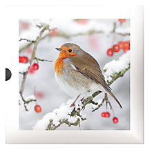 Buy Darkroom Robins With Berries Christmas Cards, Box of 16 Online at johnlewis.com